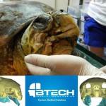 Ricostruita mascella in Titanio, Stampata in 3D a una tartatuga marina