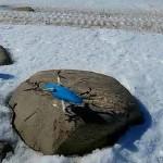 Droni Stampati in 3D per spedizione Antartide