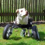 Sedia a rotelle per cani disabili stampata in 3D