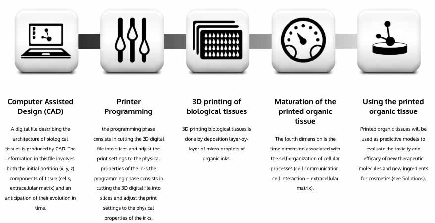 bioprinting-4d-2