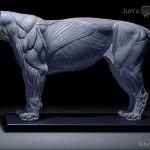 Jun Huang -Stampa 3D per creare impressionanti modelli anatomici