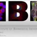 Ponteggi stampati in 3D consentono il rilascio mirato di biomolecole nel corpo umano