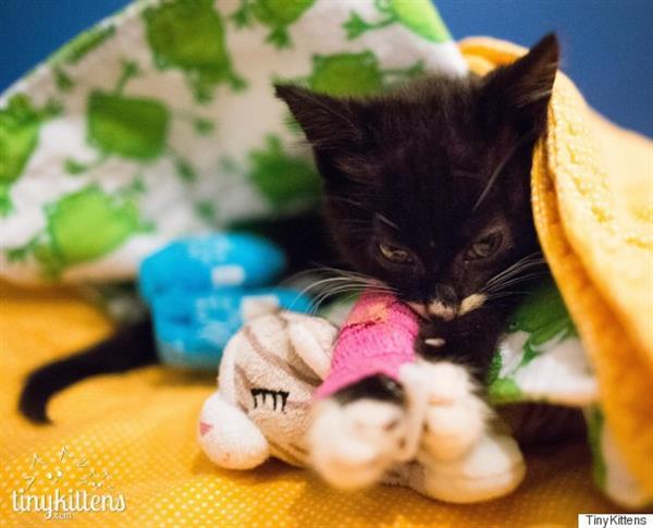 gattino-disabile-Cassidy