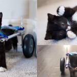 Gattino disabile cammina di nuovo grazie al carrozzella stampata in 3D da 2 studenti