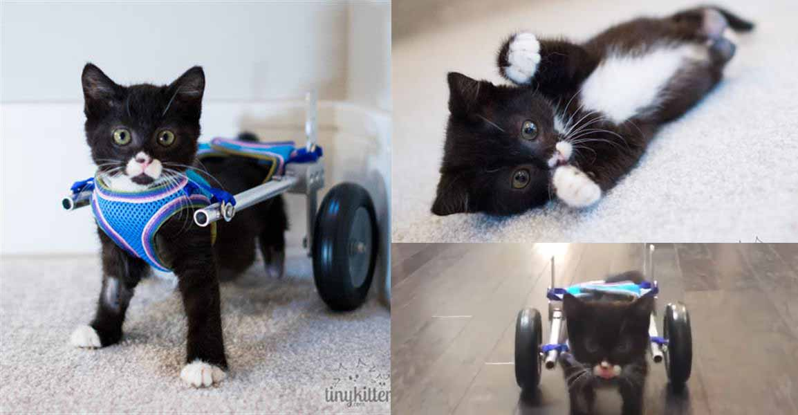 gattino-disabile-home