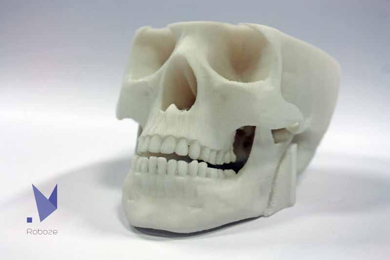 scheletro6