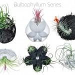 Le splendide fioriere aeree stampate in 3D di Joaquin Baldwin