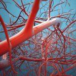 Condotti tubolari  bio-stampati possono rigenerare le cellule nervose danneggiate