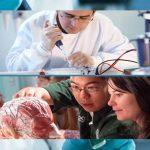 La cartilagine stampata in 3D con cellule umane cambierà gli  interventi chirurgici al volto?