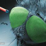 Micro-Ottiche da impiantare sugli insetti stampate in 3D