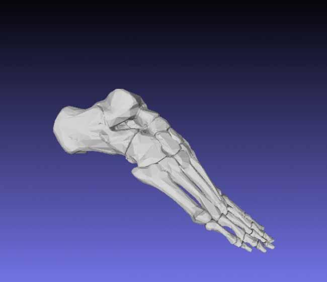 modelli-anatomici-3d-ossa-piede