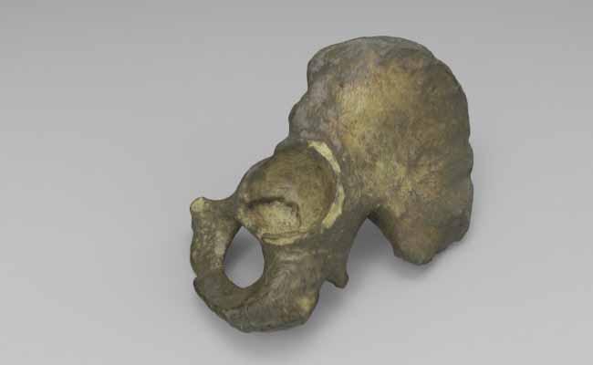 modelli-anatomici-3d-osso-anca-sinistra
