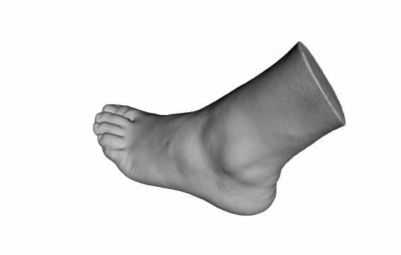 modelli-anatomici-3d-piede-umano