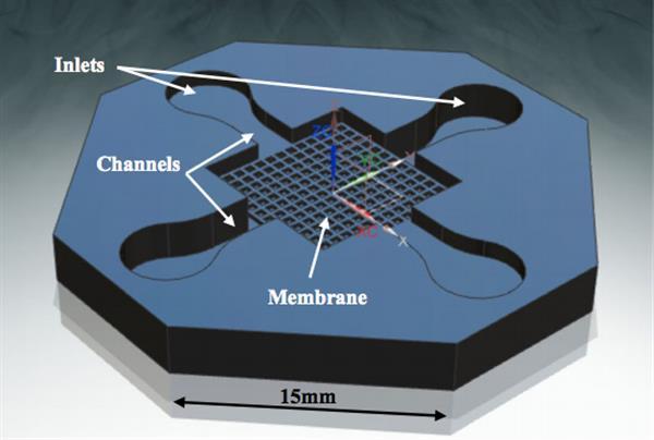 Modello 3D del microsistema biomedico per la co-cultura cellulare