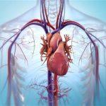 BioLife4D investe per portare sul mercato le sue bio-stampati 3D di tessuto cardiaco. Potranno eliminare i rischi di rigetto