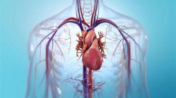 Stampato in 3D il primo cuore funzionale con cellule prelevate dal paziente. Entro 10 anni gli organi stampati in 3D diventeranno realtà.