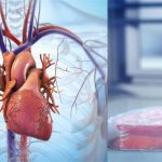 BIOLIFE4D stampa in 3D con successo il primo tessuto cardiaco umano