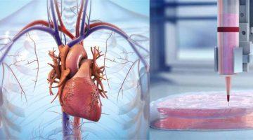 Nuova tecnologia di biostampa 3D per creare vasi sanguigni artificiali e tessuti di organi