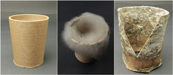 A sinistra: GROWLAY stampato fresco marrone; Medio: crescita della muffa simile al cotone; A destra: licheni a crescita lenta