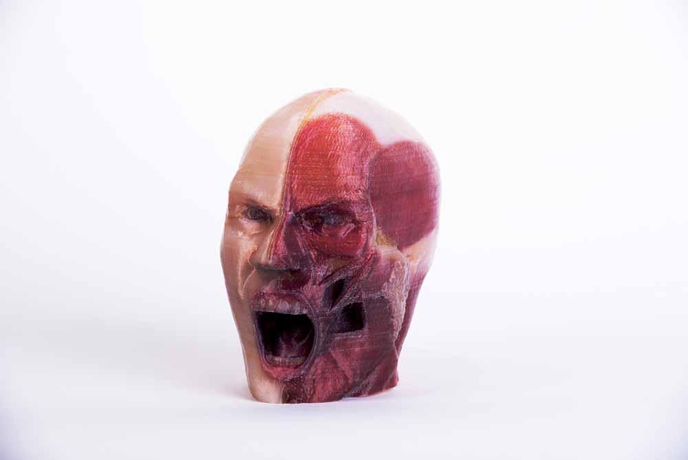 Un modello di cranio realizzato con la stampante 3D OVE.